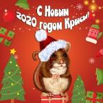 novogodnie-otkrytki-2020-krysa-3